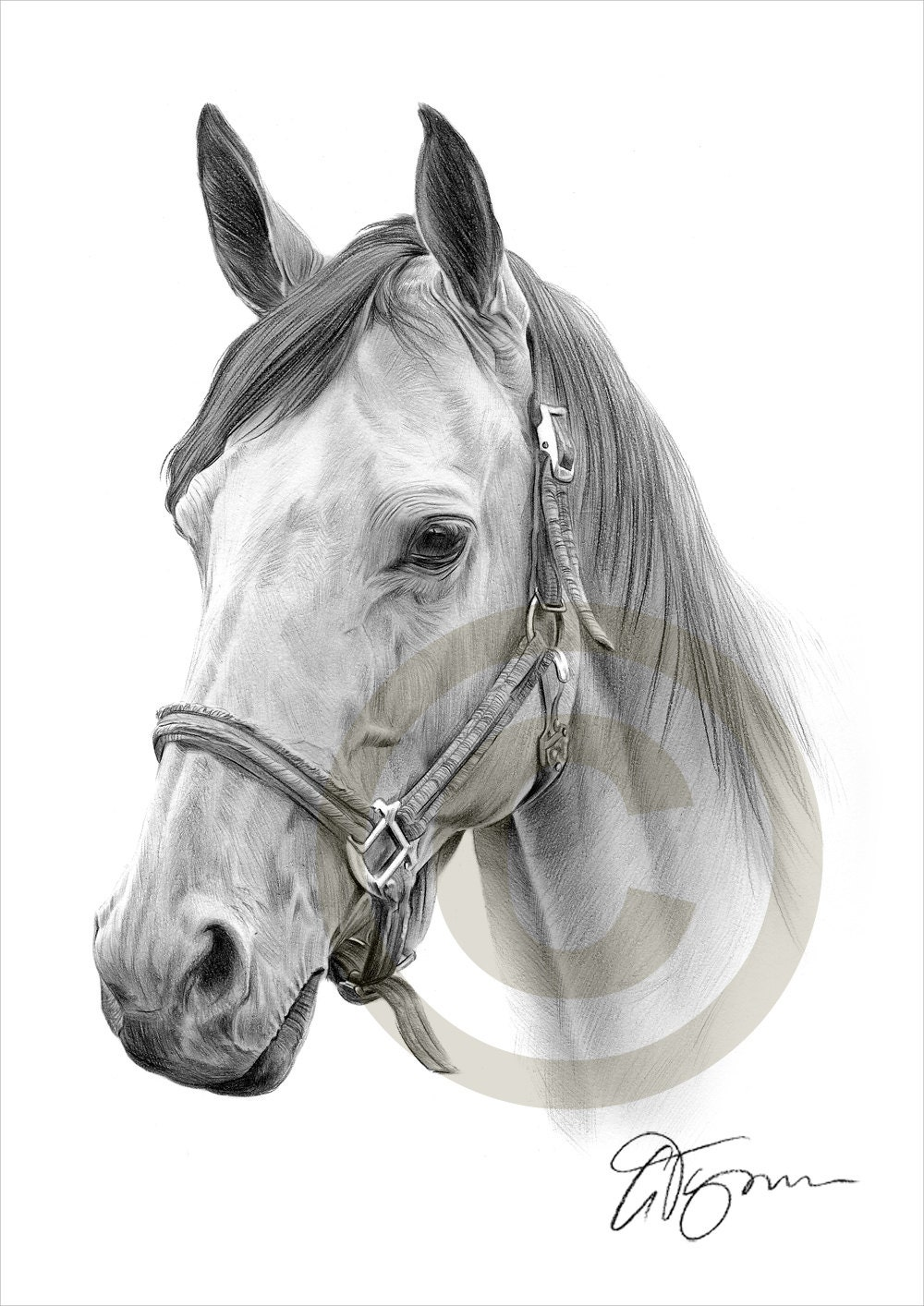 Horse pencil drawing print a4 size artwork signed by for Immagini di cavalli da disegnare