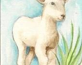 ACEO Original Watercolor  Spring Lamb