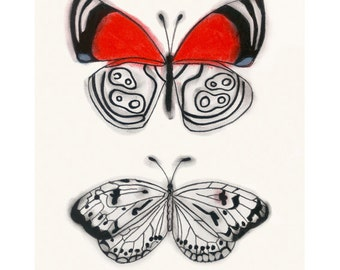 "Butterfly art drawing : Anna's Eighty-eight butterfly and a wood nymph butterfly 4"" X 6"" print - 4 for 3 Sale"