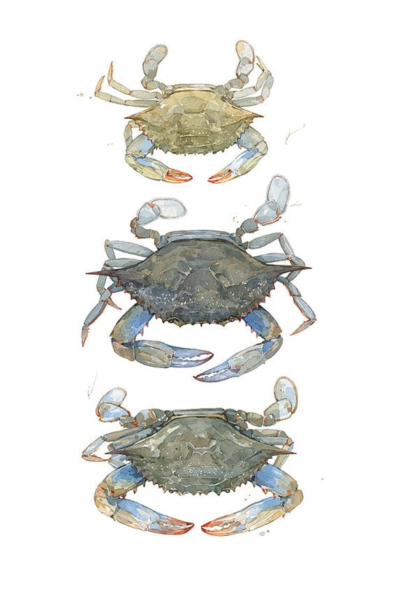 Blue Crabs Watercolor Painting Print, coastal beach art