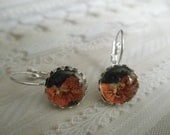 Purple, Orange Tiny Pansies Under Glass Crown Leverback Pressed Flower Earrings-Gifts Under 30-Nature's Wearable Art-Symbolizes Loyalty
