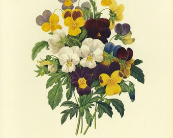 Redoute Botanical Book Plate Pansy SALE Buy 3, get 1 Free