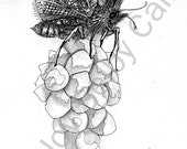 "Butterfly on Flower Zentangle-Inspired-Art, 5"" x 7"" PRINT"