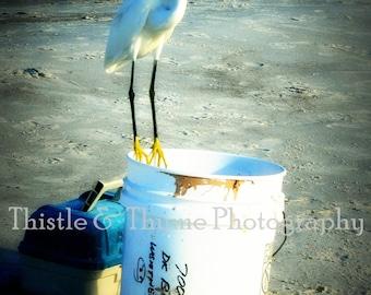 The Fisherman Egret photograph - 5x7 Photographic art print single print