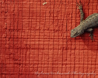 Minimal  photography  Nature Photography Lizard  photography Minimal Wall Decor Abstract  Home decor Fine Art Photography Print