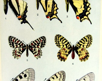 1944 Differents species of butterflies color lithograph print,  vintage antique insects engraving, entomology butterfly  lepidotera plate.