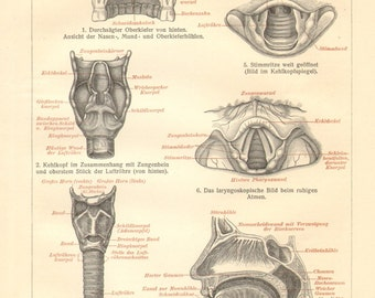 1908 Anatomy of the Oral Cavity, Nasal Cavity and Larynx Vintage Print