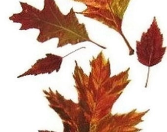 Autumn Maple And Oak Leaves Watercolor Painting