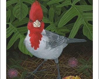 Brazilian Cardinal Giclee Print