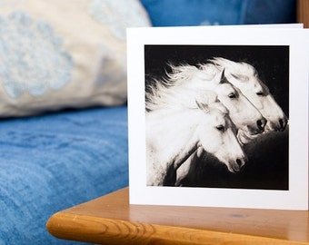 TRIO, White horses, Camargue, Art Card, Horses Greeting card, Equine photography, Black and white