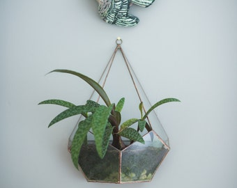Half Teardrop Glass Terrarium -- hanging or sitting terrarium -- stained glass - copper or silver - terrarium supplies -- eco friendly