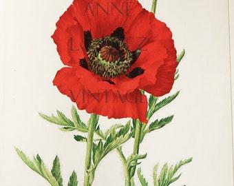 1972 Vintage poppy print,  floral prints flower, oriental poppy, red poppy botanical art French country decor