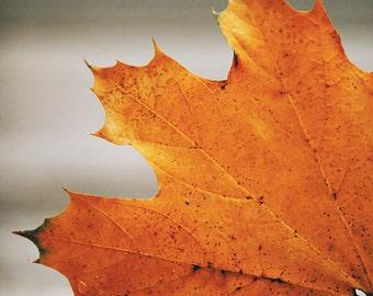 Orange leaf, orange foliage, autumn print, fall print, bright leaf photo, autumn decor
