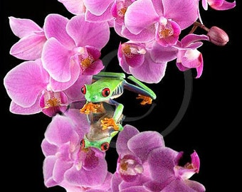 Purple Orchid - Frog on Orchid - Flower Art Photo