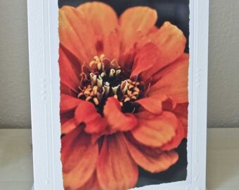 Orange Zinnia Blank Card Thank You Card- 5x7 - Embossed Paper & Envelope