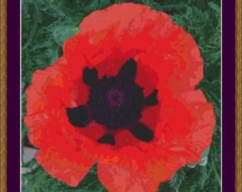 Poppy I Cross Stitch Pattern