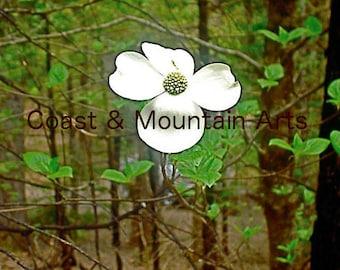 Dogwood photo card, Dogwood card, Nature photo card, Blank inside card, Photo card