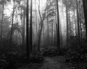 Dark Haunted Forest, gothic foggy photography, black and white print, dark art, misty, nature landscape, Dark Winter, quiet