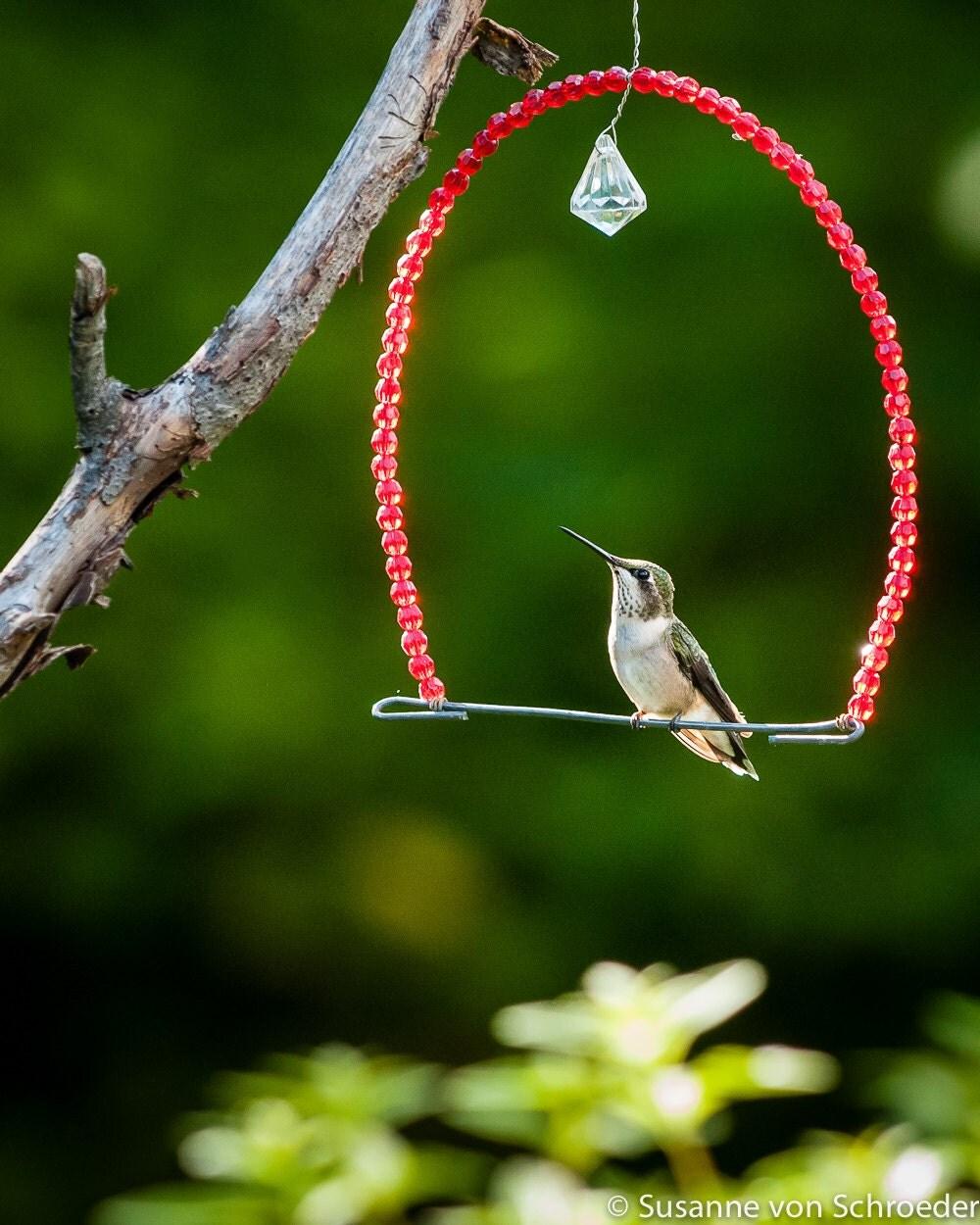 Kids wall art hummingbird on swing fine art print bird for Hummingbird decor