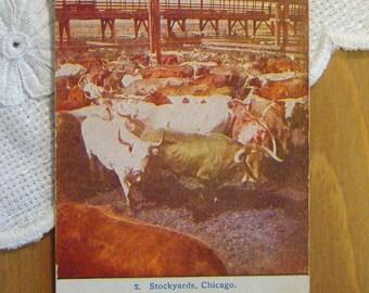 Vintage Postcard, Stockyards, Chicago, Illinois - 1910s Paper Ephemera