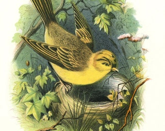 Vintage YELLOWHAMMER Bird and NEST - Digital Instant Download - nature ephemera collage supply