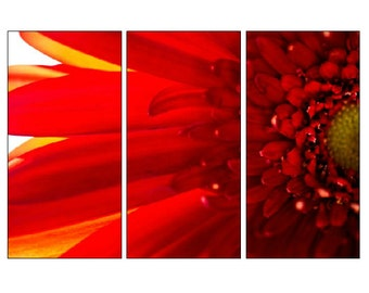 Red Daisy Triptych, 3 Panel Art, Large Wall Art, Extra Large, Red Flower Photo, Macro Photography, Huge Canvas, Split Panel Canvas, Daisy