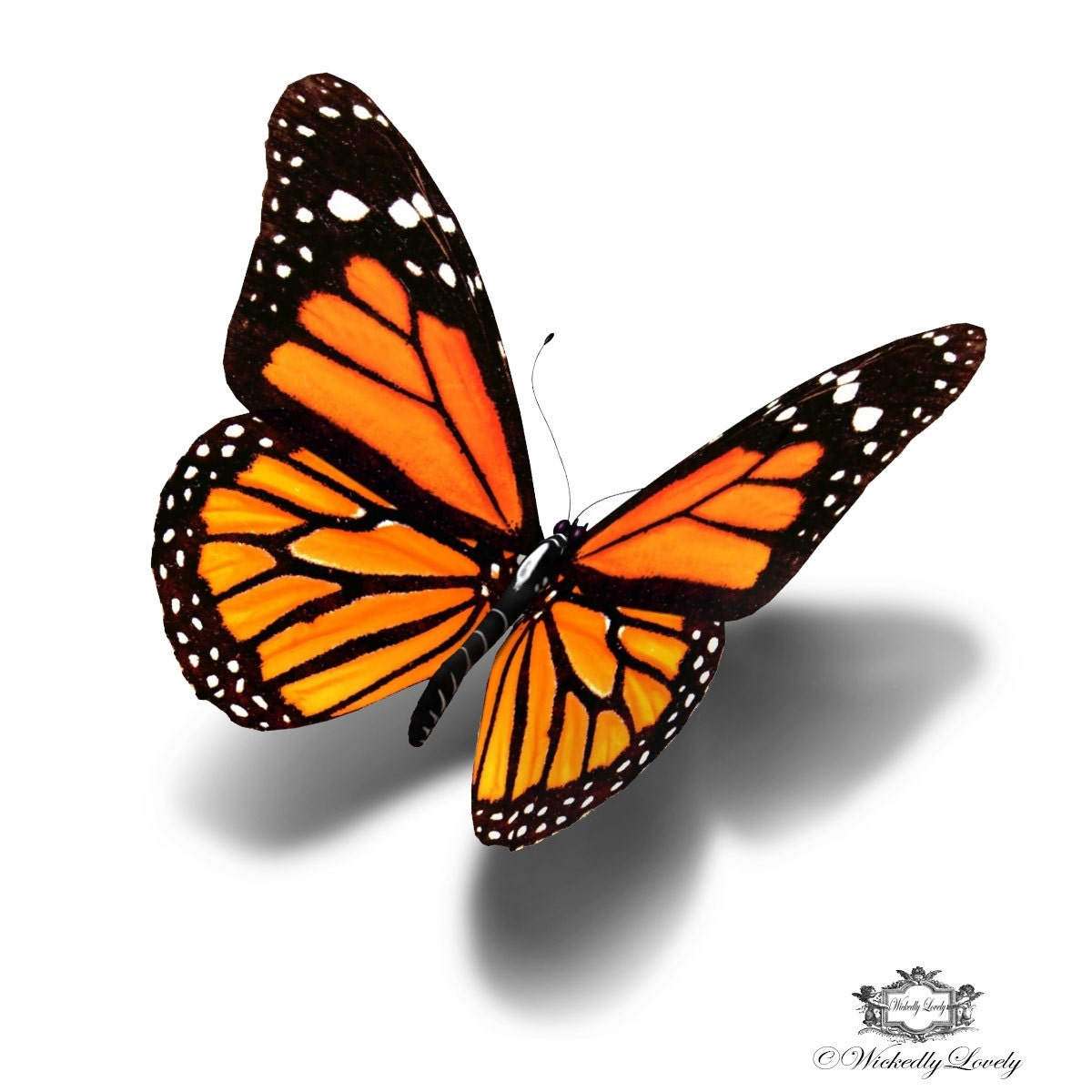 monarch butterfly 3d butterfly tattoo wickedly lovely skin. Black Bedroom Furniture Sets. Home Design Ideas