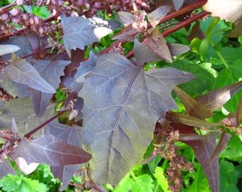 Purple Orach (Atriplex hortensis) - Organic Vegetable Seeds 1 Gram