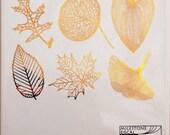 Large Leaf Skeletons - Decals for Ceramic, Glass and Enamel