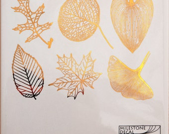 Large Leaf Skeletons - Decals for Ceramic, Glass and Enamel