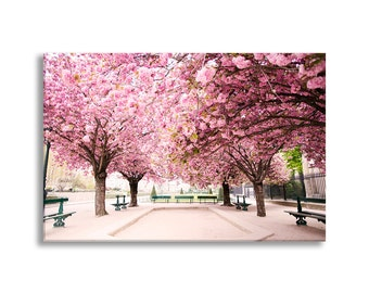 Paris Photo Canvas, April in Paris, Cherry Blossoms Fine Art Gallery Wrapped Canvas, Large Wall Art, French Home Decor