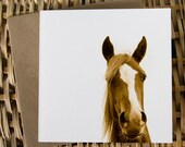 WHISKERS, Arabian horse portrait, Art Card, Horse Greeting card, Equine photography.