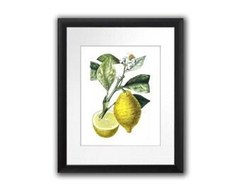 Kitchen Decor Lemon Botanical Print Citrus Fruit No.10 Wall Art Tropical Decor Wall Hanging Housewarming gift 8x10 Home Decor Art