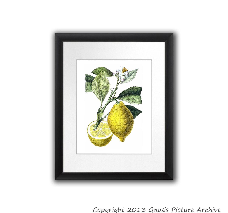 Kitchen Decor Lemon Botanical Print Citrus Fruit No 10 Wall