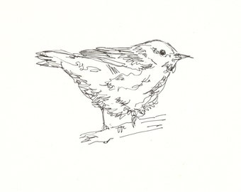 Yellow Warbler Original Pen & Ink Bird Drawing 8x10