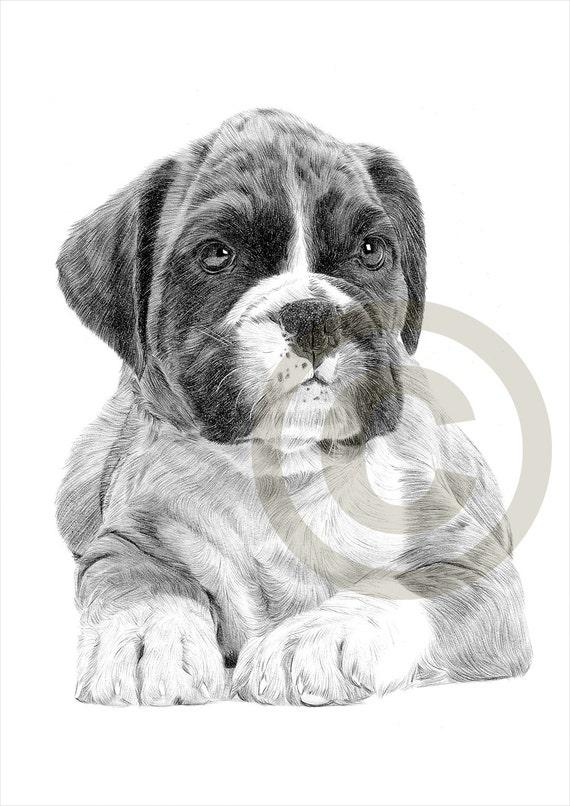 Chien chiot boxer dessin au crayon impression oeuvre format - Boxer chien dessin ...