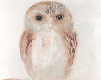 small owl 5x7 print