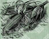 Digital Download Corn Plant Ears of Corn Stalks image Antique Illustration digi stamp, digis, digital stamp, Indian Corn Autumn Fall