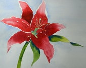 Art, Fine Art-Watercolor Painting of Red Stargazer Lily