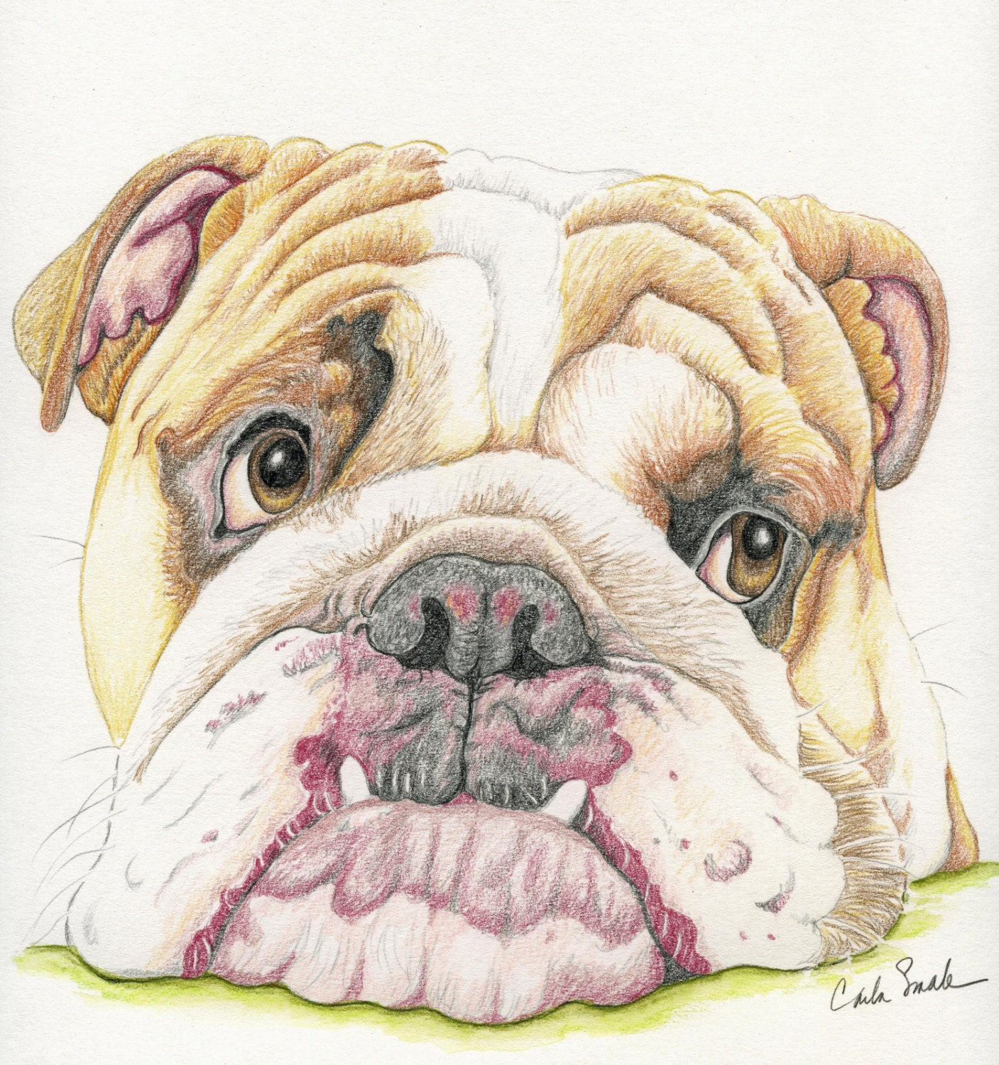 English Bulldog Limited Print from Drawing Dog Art-Carla Smale