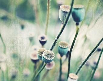 Botanical photography print poppy pods mint beige sage green rustic wall art - Pod Stems