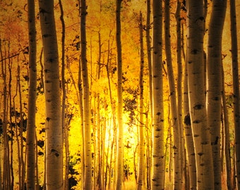 Aspen Grove Night Light from the signature photography line of Steele Photography. Taken in Aspen,  Colorado.