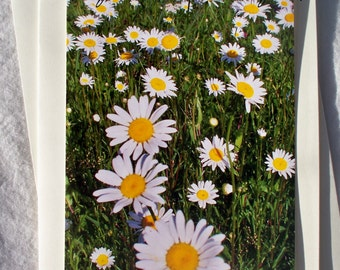 Floral Photo Card Field of Daisies White Flowers