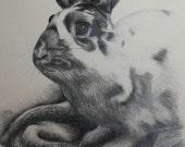 "Pencil Drawing of a Bunny Rabbit - Original Drawing 11"" x 14"" READY to SHIP"