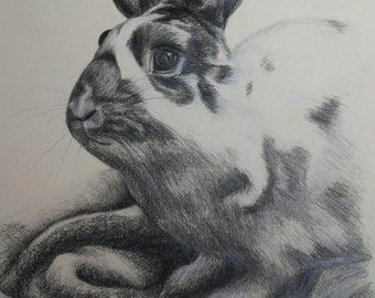"Pencil Drawing of a Bunny Rabbit - Original Drawing 11"" x 14"" READY to SHIP"