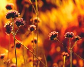 Pumpkin orange, harvest gold, burnt orange, fall flowers, fire, purple, autumn decor, blood red, coffee brown, violet, end of summer