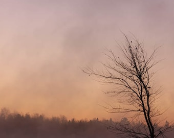 sunrise pink tree fog landscape photography fine art photography nature home decor office decor bathroom decor