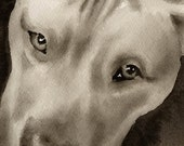 PIT BULL Sepia Art Print Signed by Watercolor Artist DJ Rogers