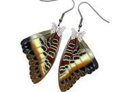 Real Butterfly Wing Earrings (Brutus FW - E027)