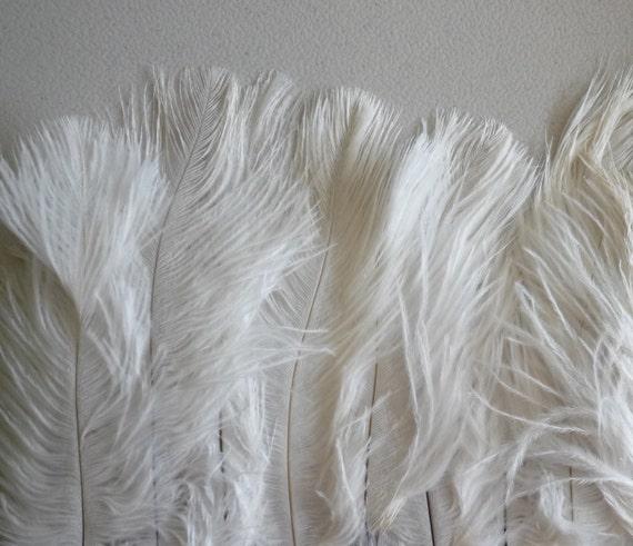 DELICATA PLUMES FRINGE , Off White / 2002